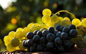 Виноградные ягоды при гастрите