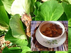 Чай из бадана при гастрите