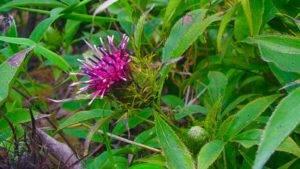Целебные травы на защите от коронавируса