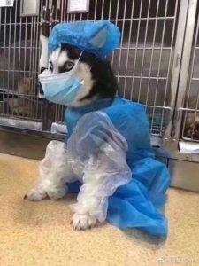 Коронавирус у собак и кошек