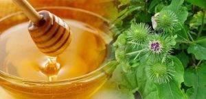 Корень лопуха и мед