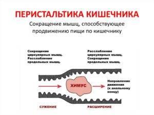 Подвижность кишечника ( перистальтика)