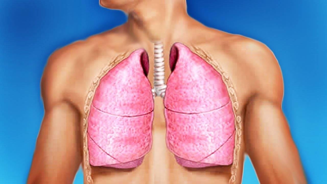 Дыхание у человека