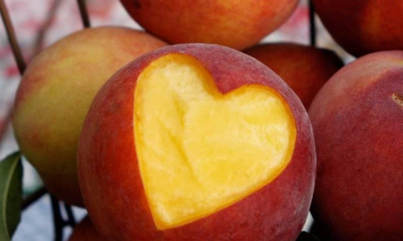Польза персиков для организма человекаПольза персиков для организма человека