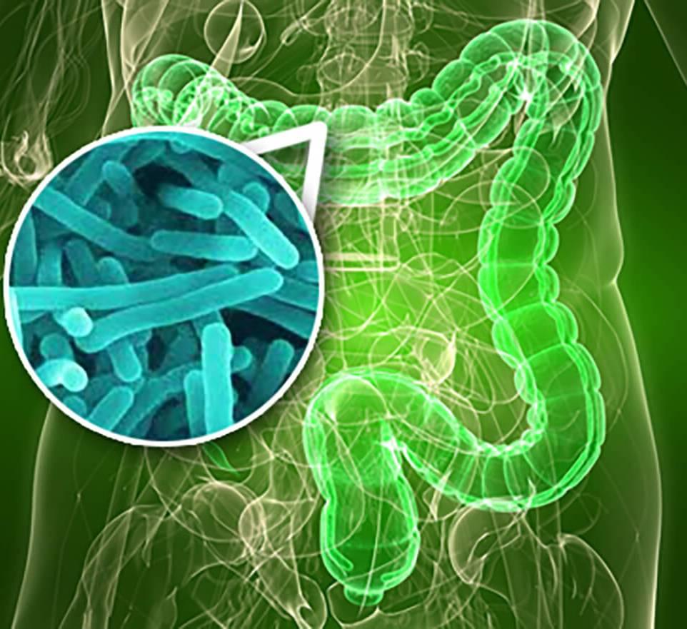 микрофлора желудочно-кишечного тракта