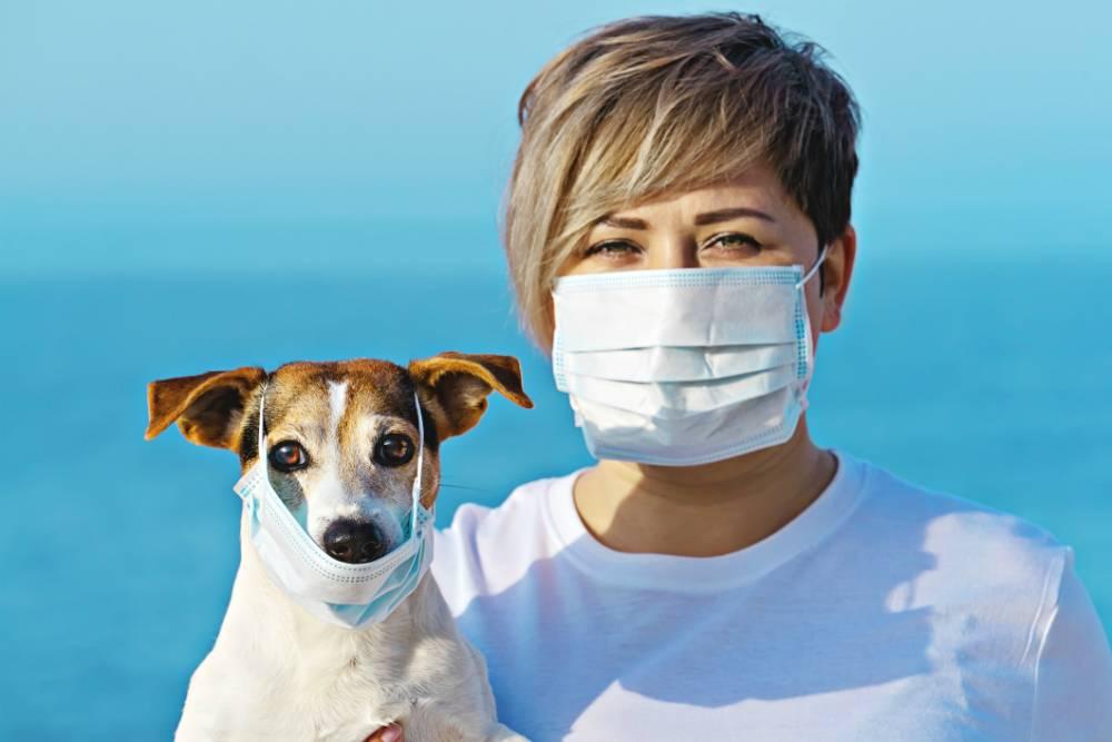 Болеют ли животные коронавирусом