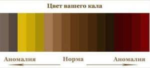 Цвет кала в норме у взрослых