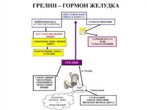Грелин гормон