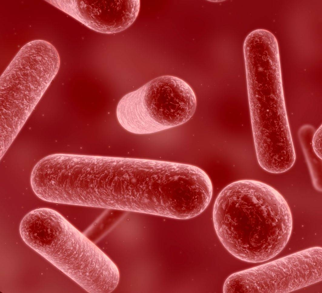 Bifidobacterium adolescentis бактерия