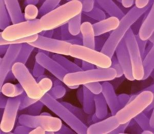 Bifidobacterium adolescentis что это