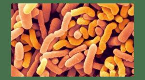 Пробиотики, содержащие бифидобактерии B. breve, используются для лечения и профилактики различных заболеваний