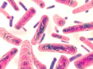 Bifidobacterium infantis бактерии
