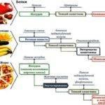 Основные ферменты пищеварительной системы