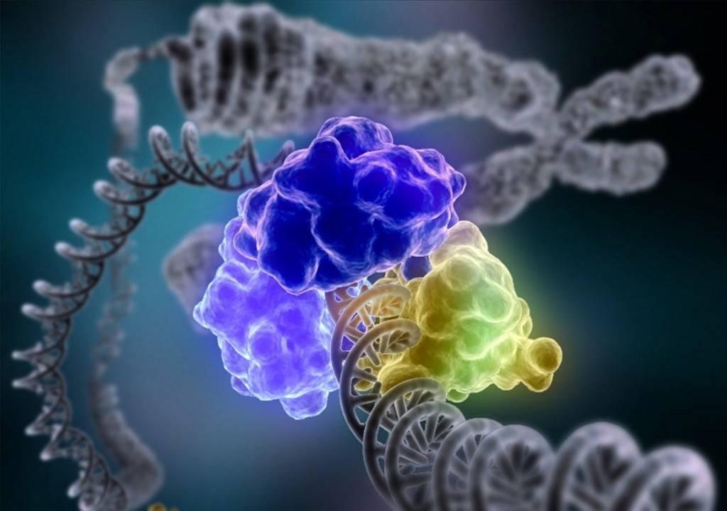 Ферменты желудка и их функции
