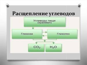 Как расщепляются углеводы