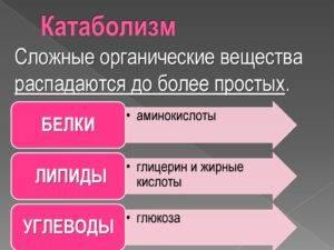 Катаболизм
