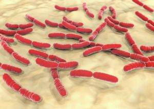 Lactobacillus crispatus