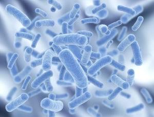 Lactobacillus johnsonii
