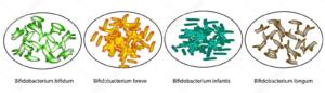 Штаммы пробиотиков B. adolescentis