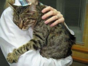 Уремический гастрит у кошек причины