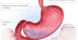 антрального отдела желудка