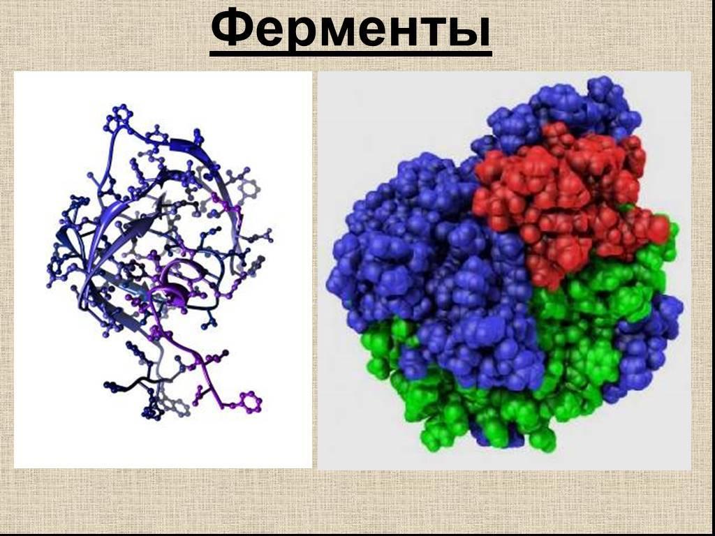 ферменты пищеварительные