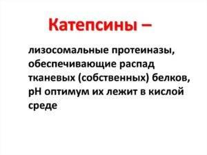 катепсин