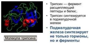 трипсин фермент