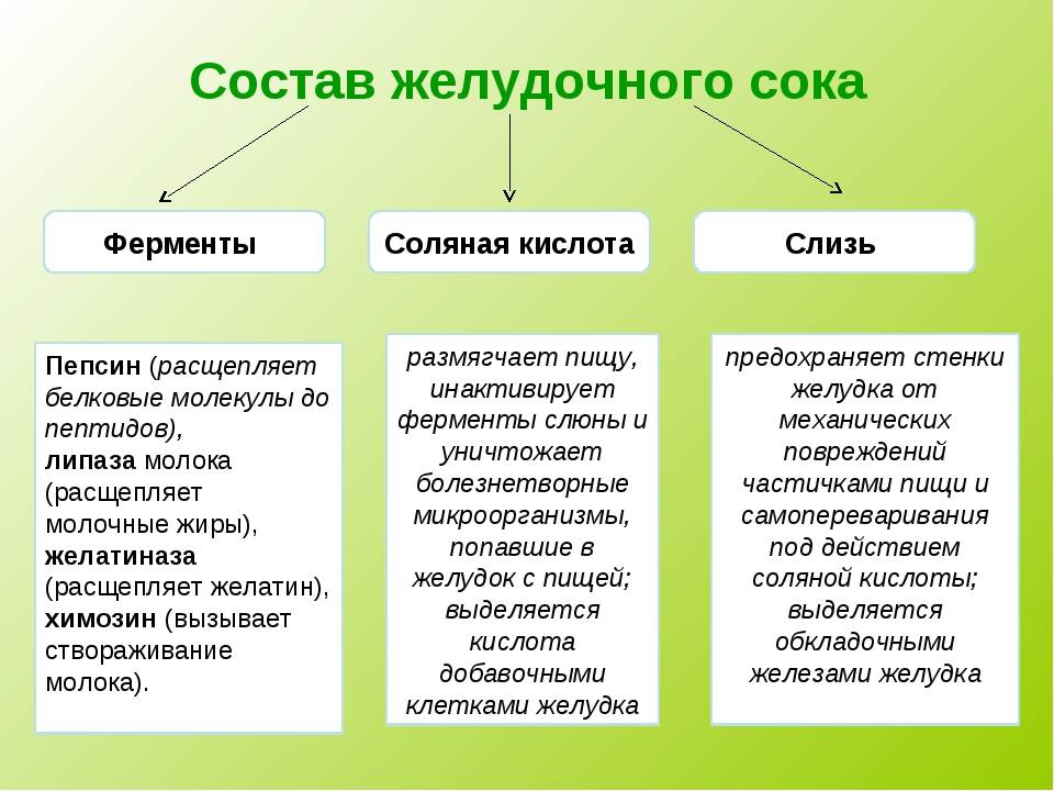 Желудочная кислота состав