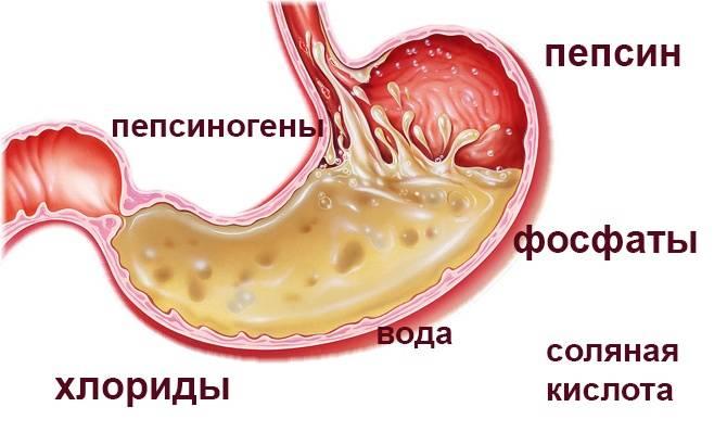 Желудочная кислота