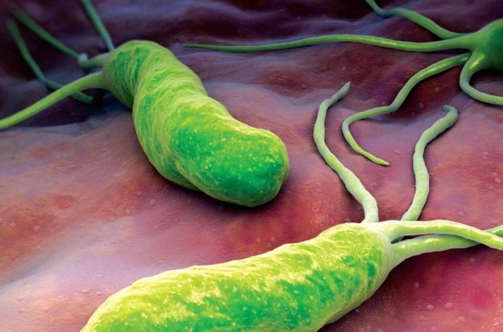Бактерии вызывающие понос