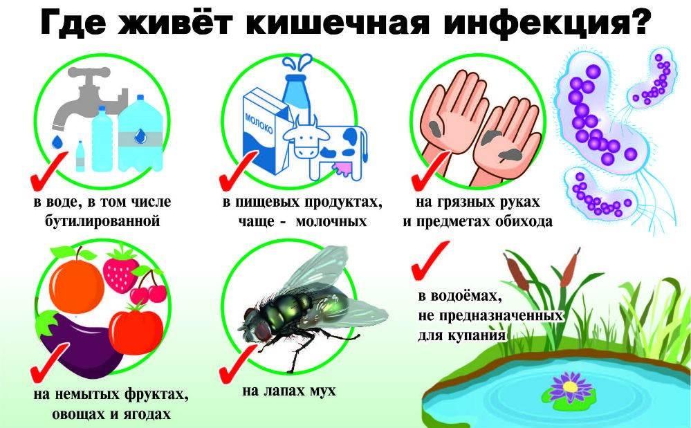 Как распространяются кишечные инфекции