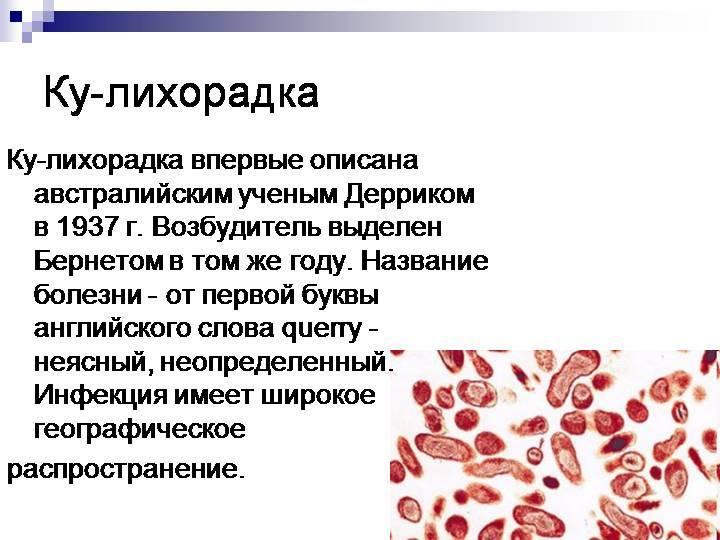Признаки и симптомы ку-лихорадки
