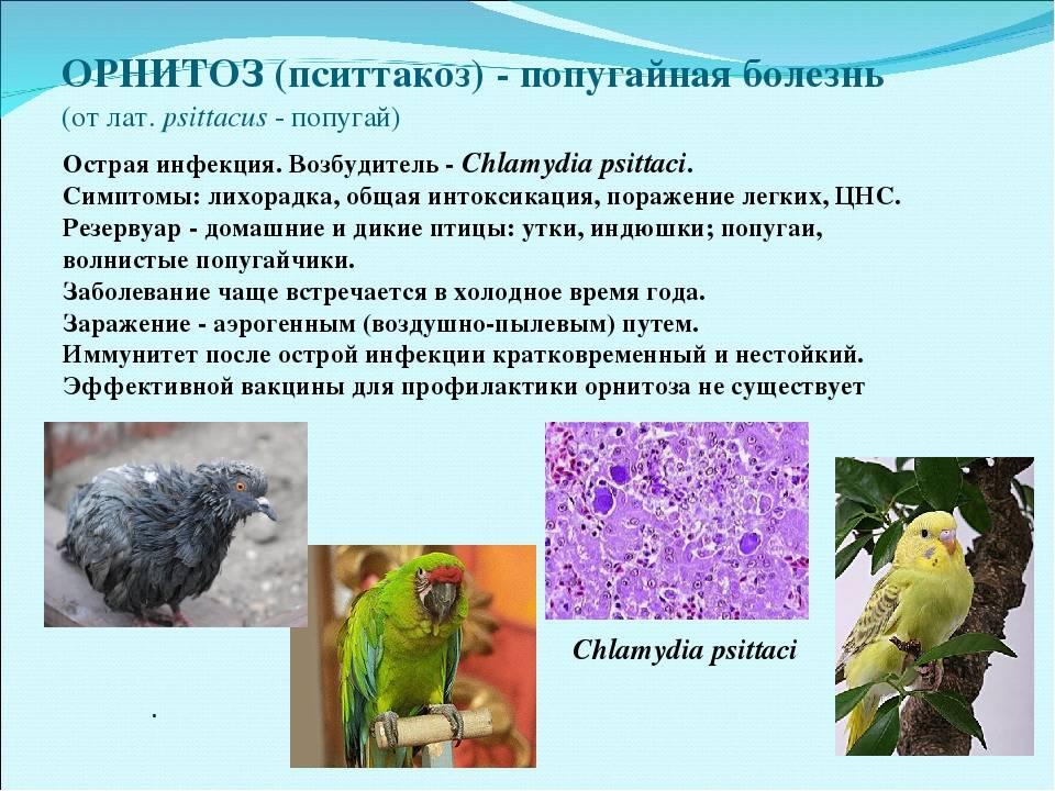 Пситтакоз