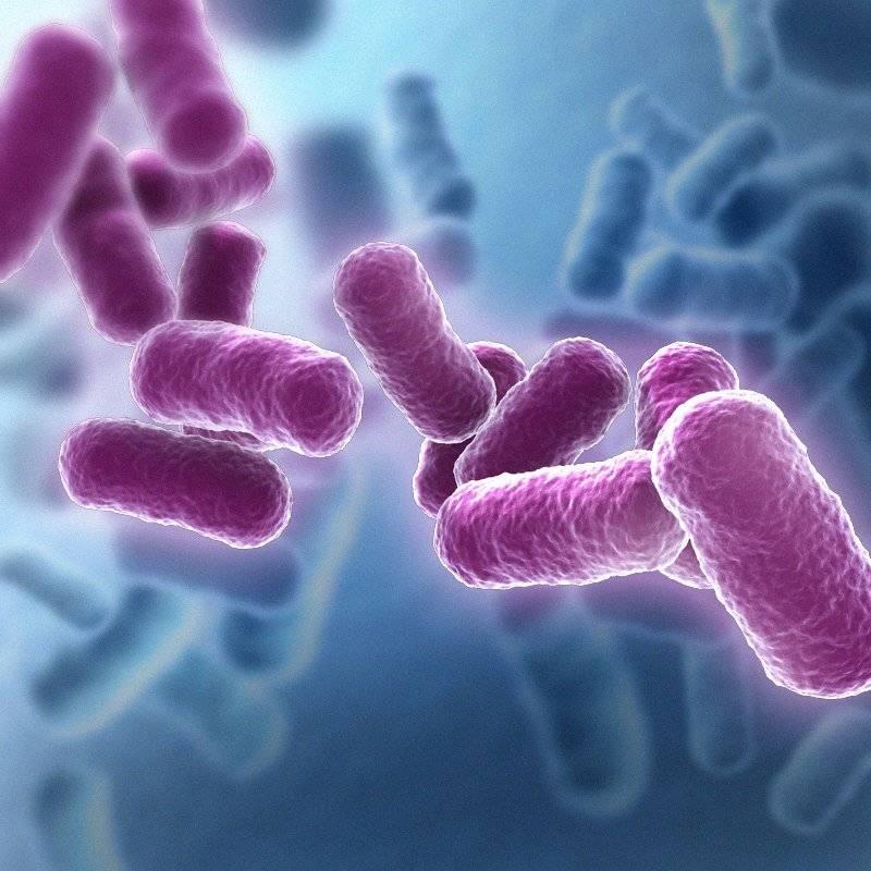 Виды Bacillus
