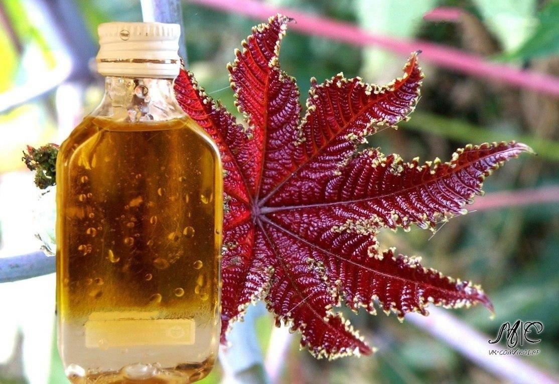 Касторовое масло для желудка