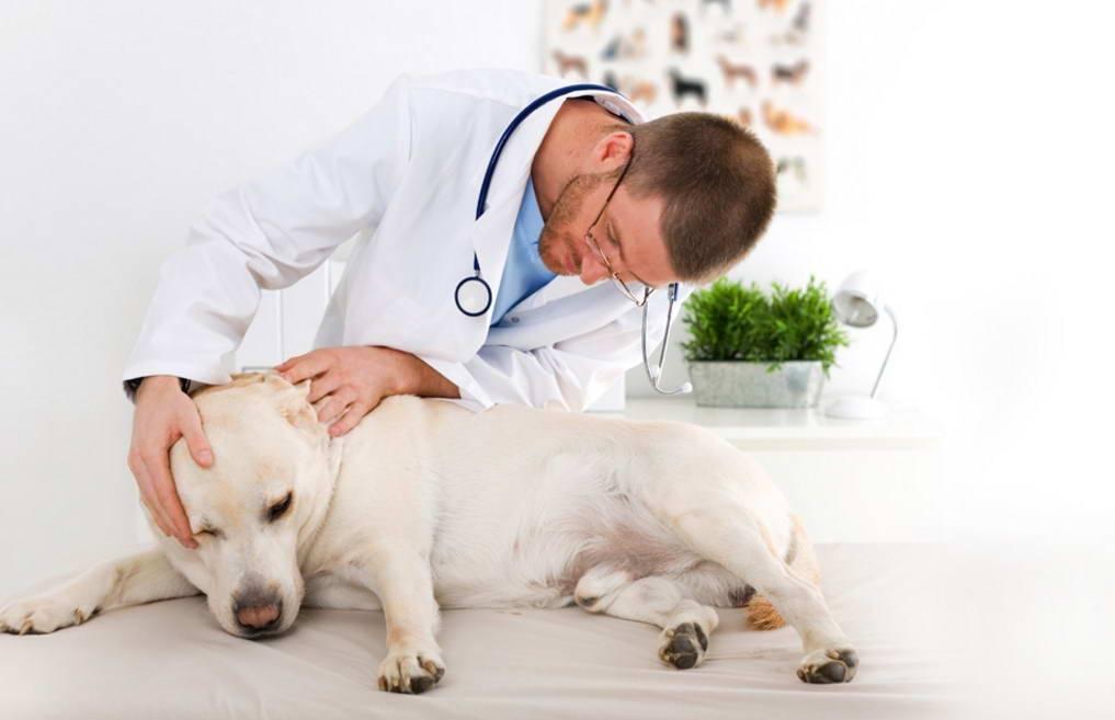 Рак желудка у собак диагностика