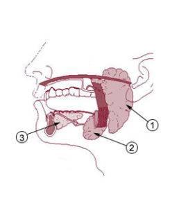 ухость во рту и языке часто возникает из-за нарушения секреции слюны