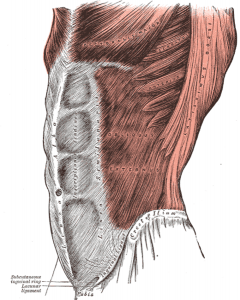 Боль в мышцах живота