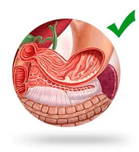 Интересные факты о желудке