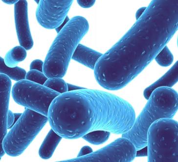 Lactobacillus rhamnosus бактерии