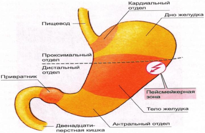 Нижние отделы ЖКТ кровотечение