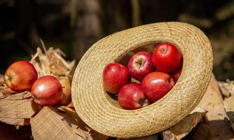 после яблок болит живот