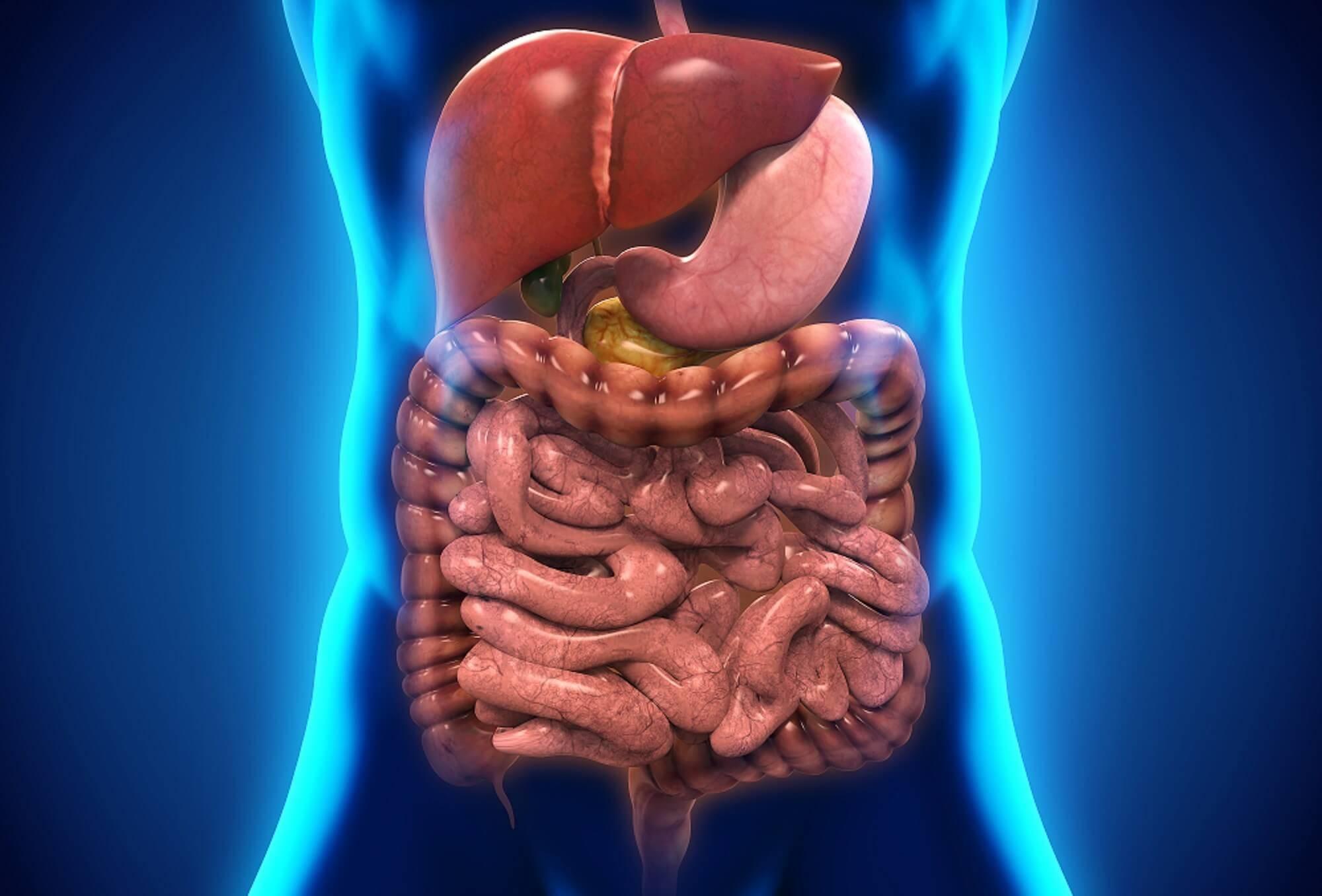 кишечник и заболевания печени