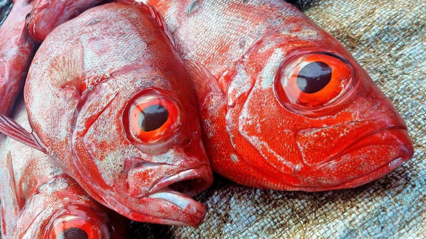Отравление рыбой